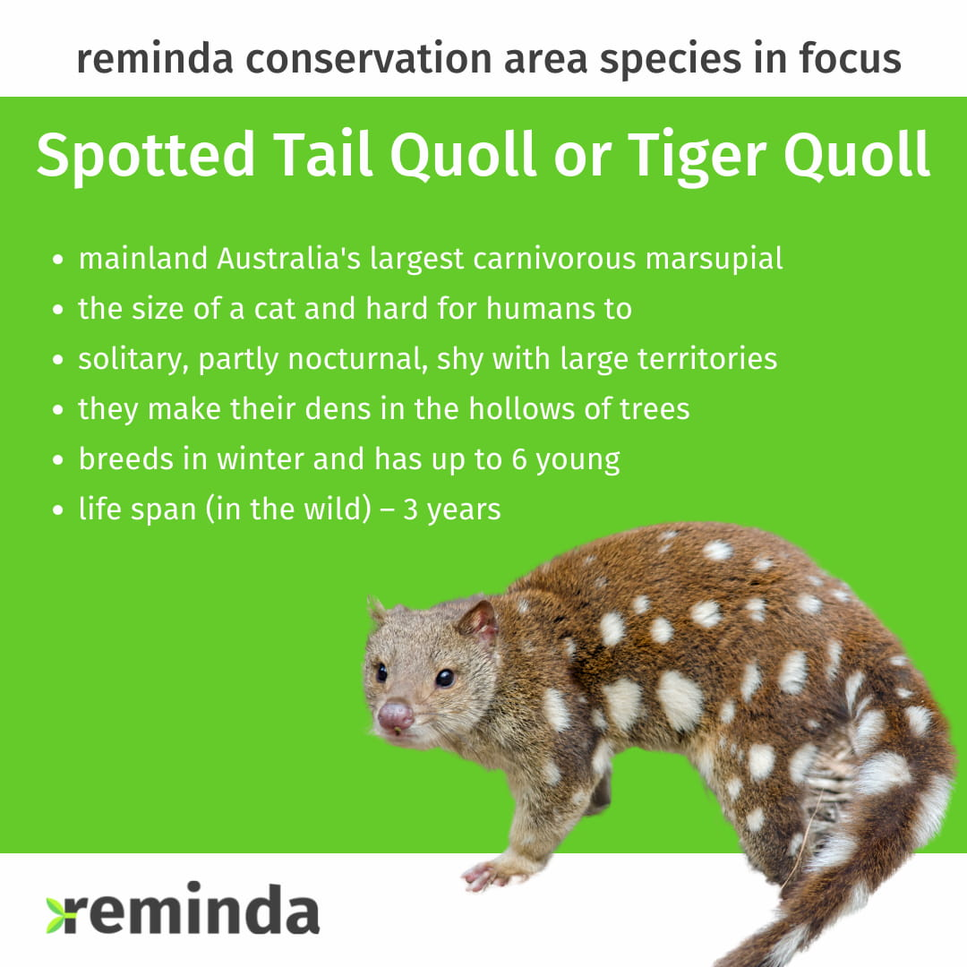 About the spotted quoll